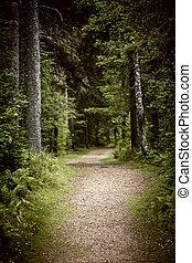 caminho, em, escuro, mal-humorado, floresta