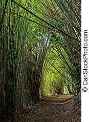 caminho, em, floresta bambu