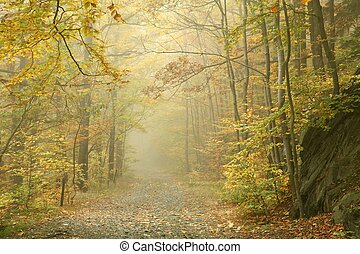 caminho, em, nebuloso, floresta outono