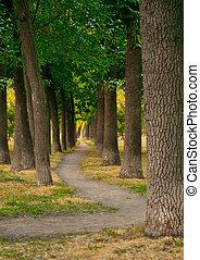 caminho, em, um, parque