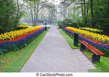 caminho, flores, primavera