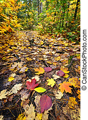 caminho, floresta, outono