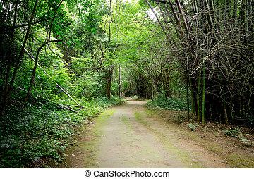 caminho, floresta, tailandia