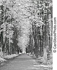 caminho, fotografia, park., infravermelho