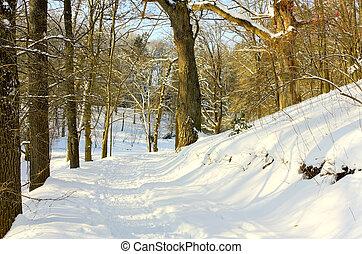 caminho, inverno