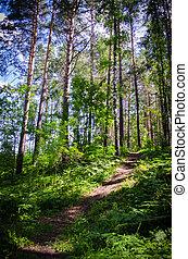 caminho, madeira