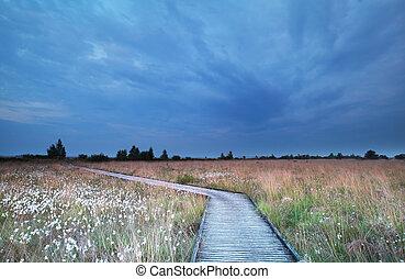 caminho madeira, ligado, pântano, com, cotton-grass