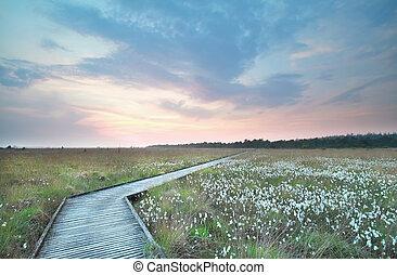 caminho madeira, ligado, pântano, em, sundown