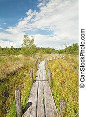 caminho madeira, ligado, pântano, em, verão