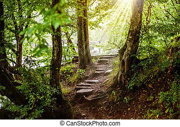 caminho, magia, floresta, passos, bonito