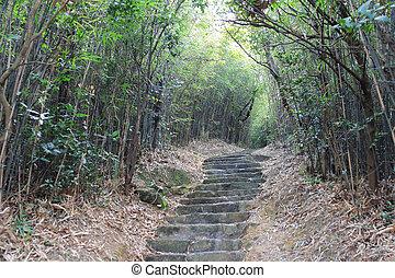 caminho, natureza