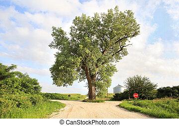 camino, árbol, medio