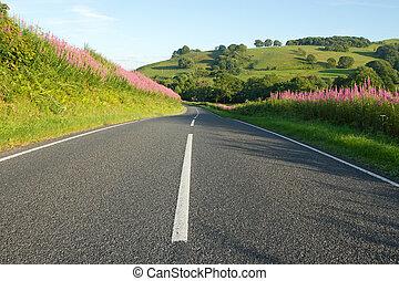 camino de país, en, gales, con, rosebay, willowherb, verges.
