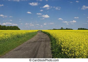 camino de tierra, entre, un, campo, de, violación