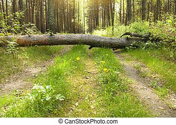 camino, en, bosque