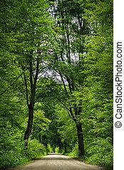camino, en, el, forest.