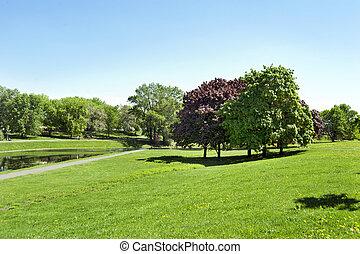 camino, en el parque, por, verano