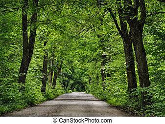 camino, en, el, verde, forest.