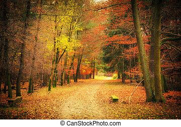 camino, en, otoño, parque