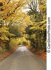 camino país otoño