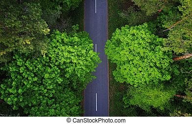 camino, por, el, bosque, vista aérea