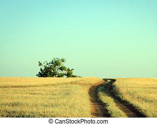 camino rural, primero, a, un, solo, roble, en, verano