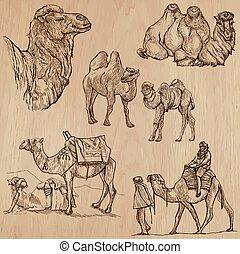 cammelli, -, un, mano, disegnato, vectors., convertito