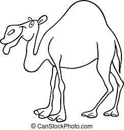 cammello dromedario, per, libro colorante