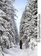 camminare, in, inverno, foresta