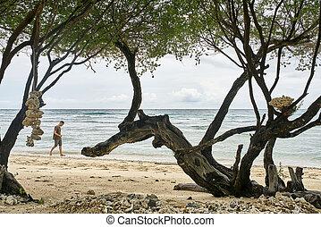 camminare, tropicale, sabbia, tipo, spiaggia, bello