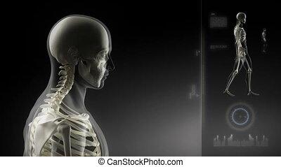 camminare, uomo, testa, scansione