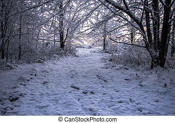 camminata dentro, uno, wonderland inverno