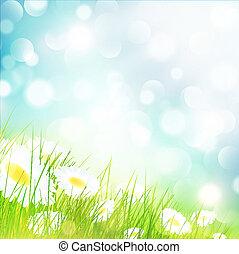 camomila, flor, campo