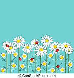 camomila, flores, con, un, mariquitas, en, azul, backgroun