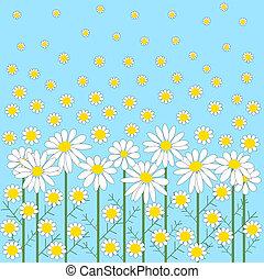 camomila, flores, en, un, fondo azul