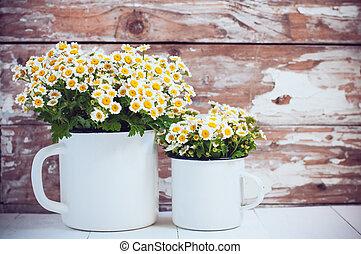 camomila, flores, jarras, esmalte