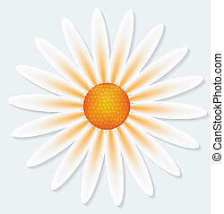 Camomile flower on gray background. Vector illustration