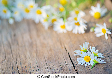 camomile flower on wood