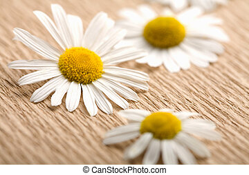 camomile flowers over recycled paper. ecological background