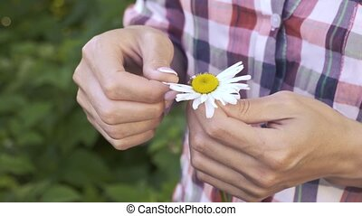 Camomile in female hands on a green grass background. Fortune-telling on a camomile.