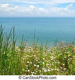 camomile on the sea shore