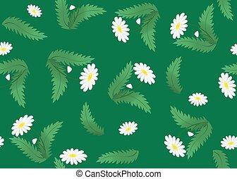 camomile, textura, verde, floral, vector