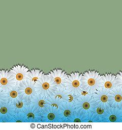 camomiles, fundo, floral