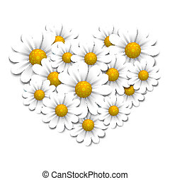 Camomiles in the shape of heart