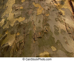 Camouflage Tree - Ever wonder how the Military came up with...