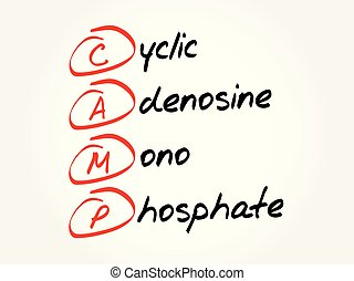 CAMP acronym, concept background