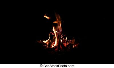 Camp Fire Flames - Camp fire burning in the night
