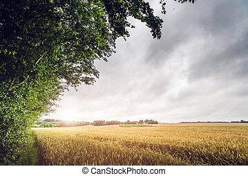 campagna, campo, tramonto, paesaggio