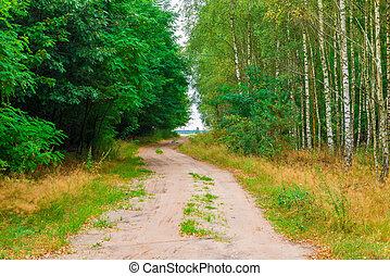 campagna, estate, foresta, strada