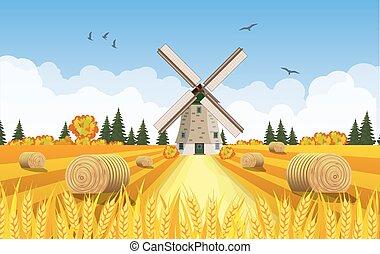 campagna, mucchi fieno, fields., paesaggio